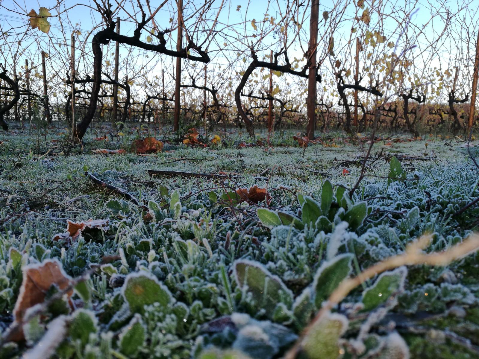 Geada manhã de inverno - Encruzado - Carvalhão Torto